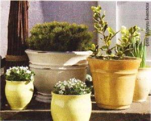 бачонки для растений