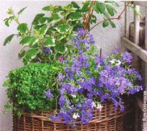 Корзина для растений