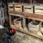 пример гнездовья в курятнике 3