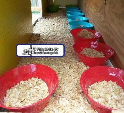 гнезда в курятнике на полу