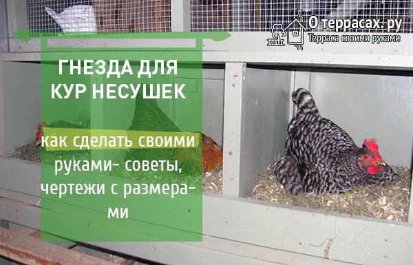 как сделать гнезда для курятника